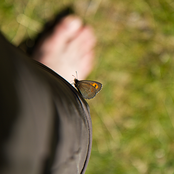Week 16 :: On The Wings Of Feet Home (Freedom)